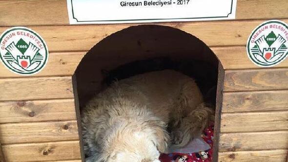 Giresun Belediyesi sokak hayvanları için kulübe yaptırdı