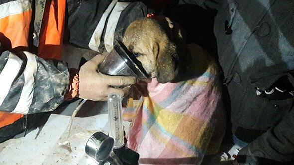 Ne varsa gençlerde var Kuyuya düşen köpek kurtarıldı, sosyal medyadan destek yağdı
