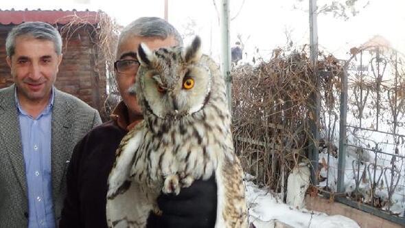 Kulaklı orman baykuşu tedavi altına alındı
