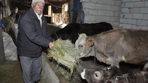 Bitlis'te büyükbaş hayvanları telef eden hastalık araştırılıyor