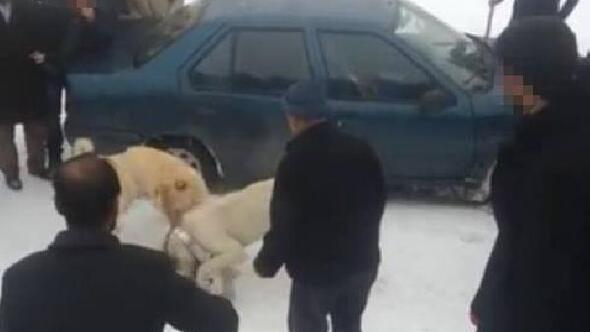 Köpek dövüştürene 5 bin 207 lira para cezası