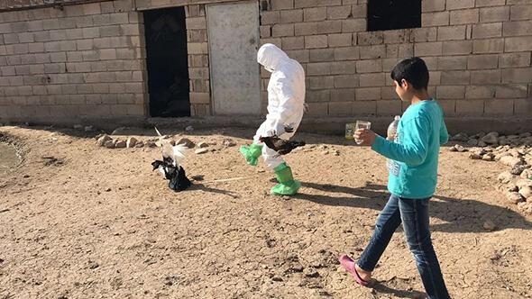 Korkutan gelişme Kuş gribi tespit edildi, ekipler tek tek topladı