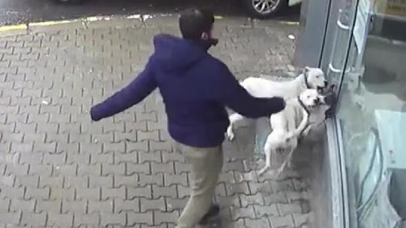 Sakaryada iki pitbullun saldırdığı sokak köpeği ağır yaralı