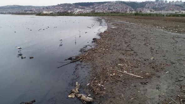 İzmit Körfezi'nde göçmen kuşların cenneti kirlendi ile ilgili görsel sonucu