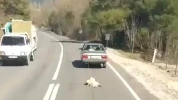 Köpeği otomobilin arkasına bağlayıp, kilometrelerce sürüklediler