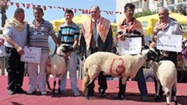 3. Sakız Koyunu Şenliği'ne doğru