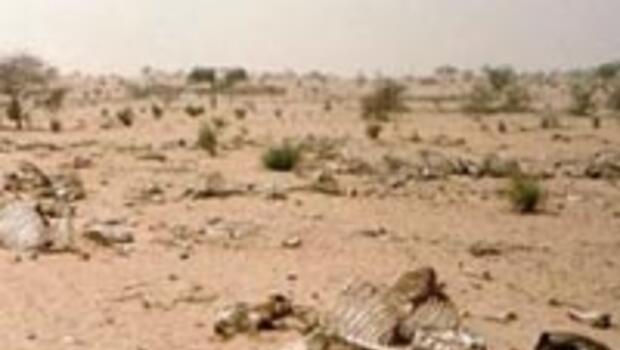 Küresel ısınmanın 5 ölümcül etkisi