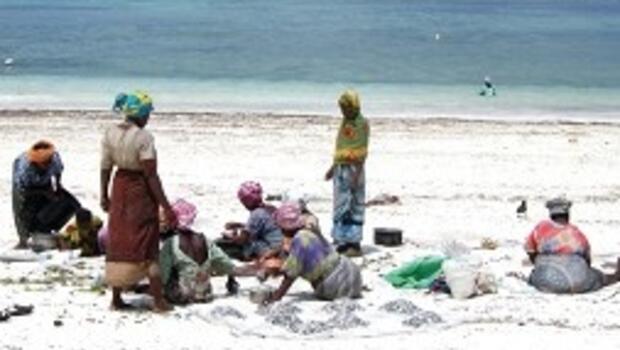 Baharat adasının deniz çiftçileri