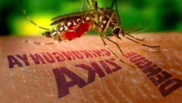 Zika Virüsü nedir, tedavisi var mı