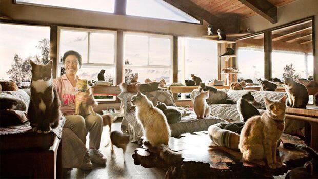 Evini 1100 kedi ile paylaşıyor