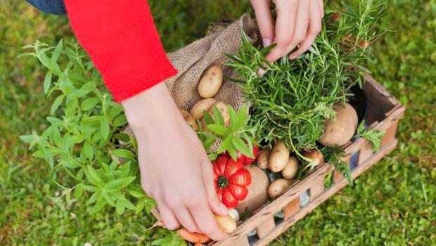 Raw Food (çiğ beslenme) nedir
