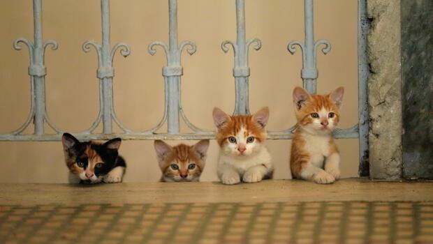 İstanbul'da kedi, dünyada örneği olmayan bir şey