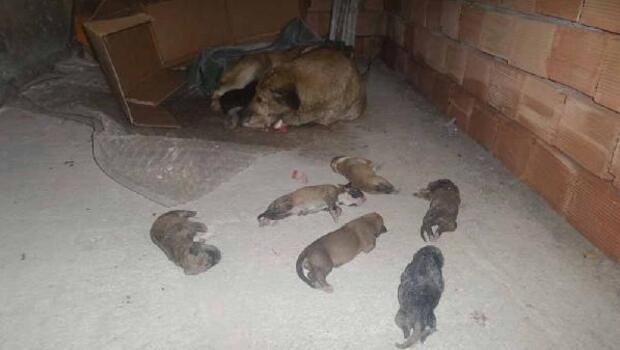 6 yavru köpek soğuktan dondu
