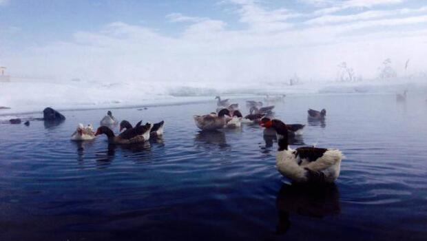 Kazlar, günler sonra suya kavuştu