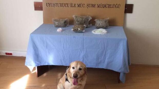 Narkotik köpeği 'vasil' esrar ve uyuşturucu buldu