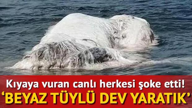 Kıyıya vuran beyaz tüylü dev yaratık halkı şoke etti
