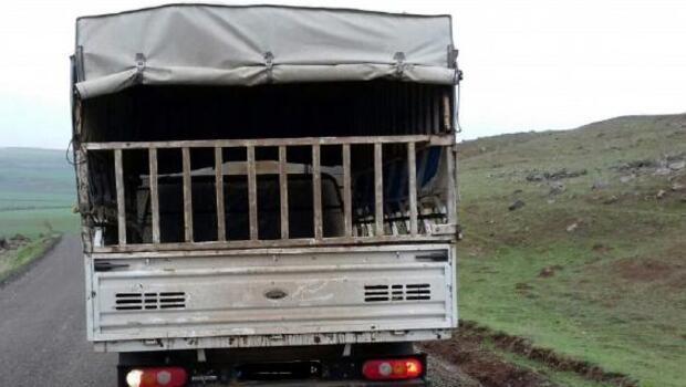 Bingöl'deki hayvan hırsızları, Diyarbakırda yakalandı