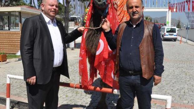 KKTCde deve güreşi düzenlenecek
