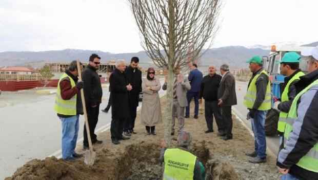 Belediyeden ağaçlandırma çalışması