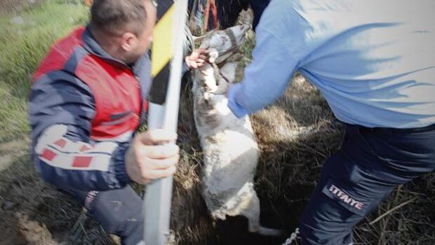 İtfaiye, kuyuya düşen gebe keçiyi kurtardı