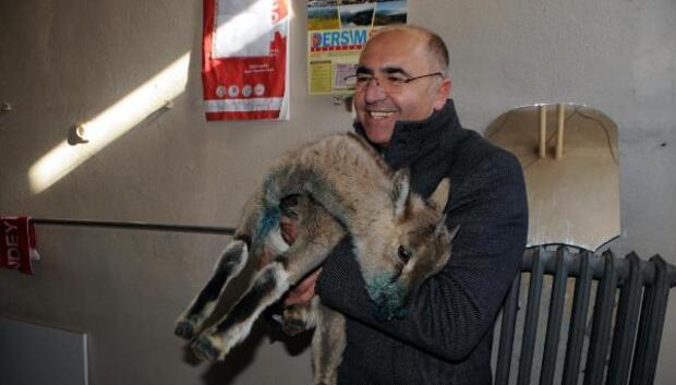Yaralı dağ keçisi yavrusuna belediye sahip çıktı