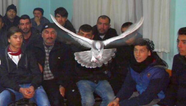 Güvercinler açık artırma usulü ile satılıyor