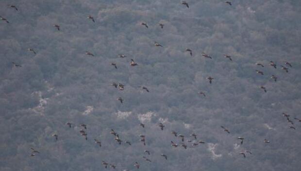 Bursada Kış Ortası 59 bin kuş sayıldı