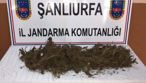 Akçakalede 1 kilo esrara 2 gözaltı