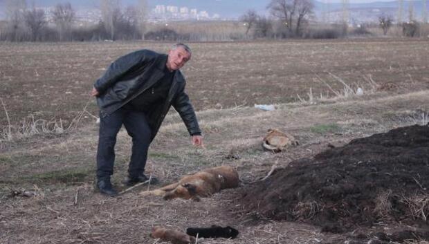 Tavşanlıda köpek katliamı