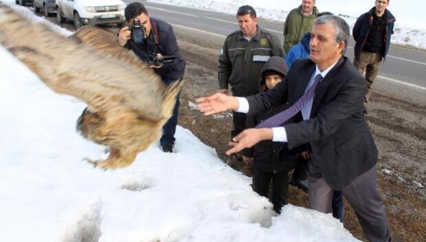 Vali, puhu kuşunu doğaya bıraktı