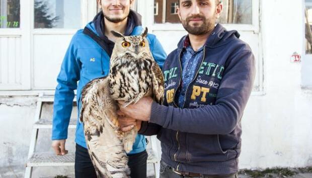 Yaralı olarak bulunan baykuş tedavi altına alındı