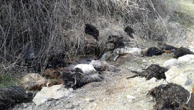 Kayıp 35 keçinin leşi uçurumda bulundu