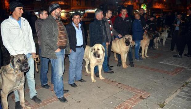 Hollandayı Kangal köpekleriyle protesto ettiler