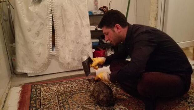 Çocukların tüylerine yapıştırıcı sürdüğü yavru kediyi banyoda yıkadı
