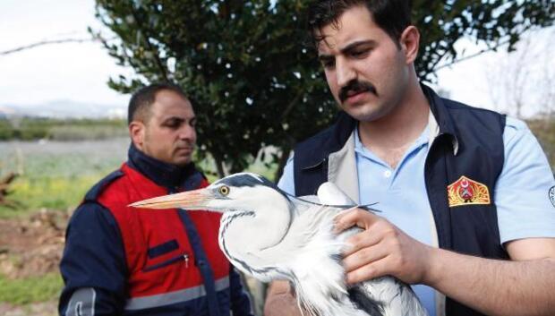 Yaralı gri balıkçıl kuşuna şefkat eli