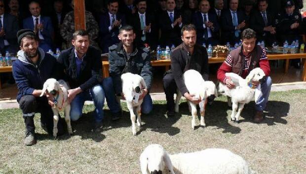 Altınyaylada kuzu festivali
