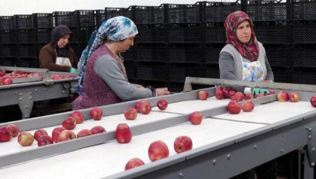 Girişimci kardeşler elma ihracatı yapıyor