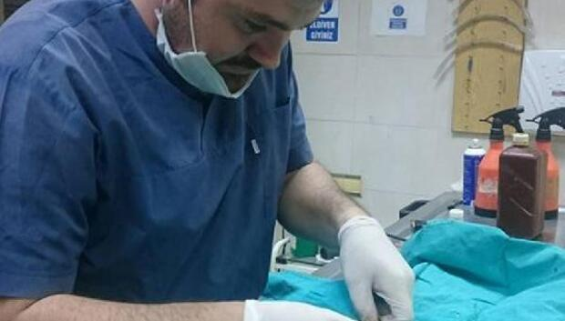 Köpeklerin saldırdığı gebe kediye operasyon