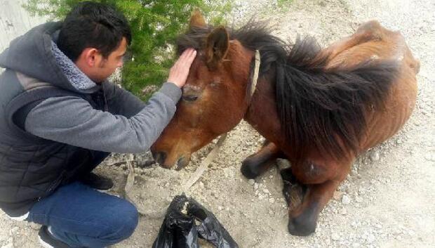 Bitkin bulunan at sahibinden alınıp tedaviye götürüldü