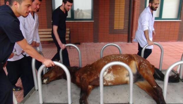 Ispartada ağaca bağlı bulunan at, kurtarılamadı
