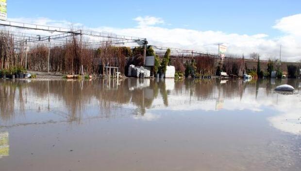 Sağanak yağış, fidanlıkları sular altında bıraktı
