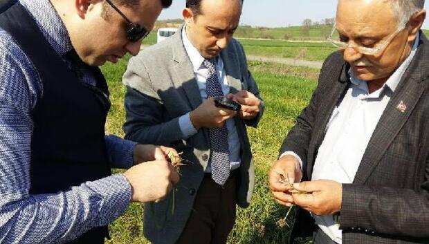 Malkara'da hububat ekili arazilerin kontrollerine başlandı