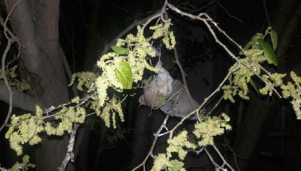 Ağaçta mahsur kalan kumruyu itfaiye kurtardı