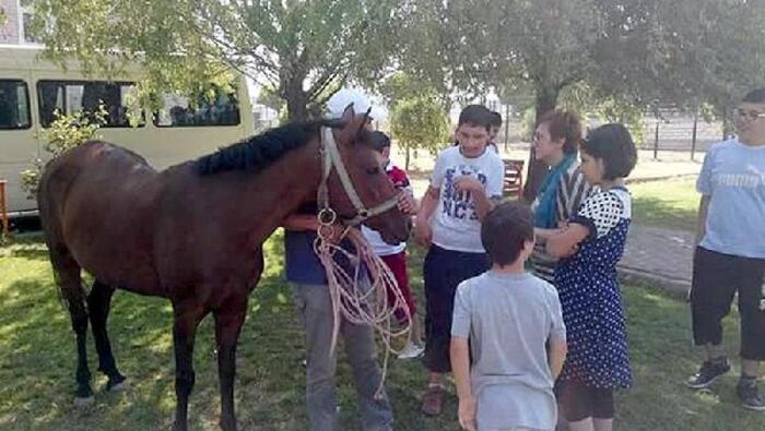 Atın sahip olduğu ve kiraladığı para ne kadar