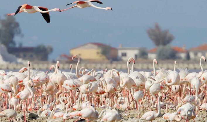 Flamingo otoyolu
