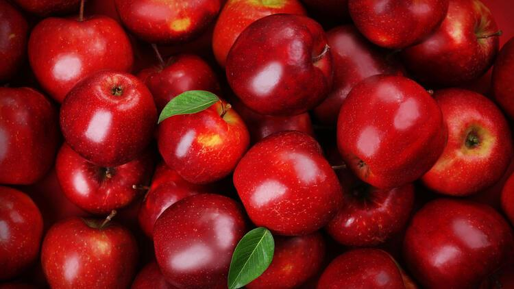 Image result for elma