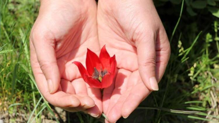 Yılda Bir Kez Açıyor Bu çiçeği Koparan Yandı 48 Bin Lira Cezası