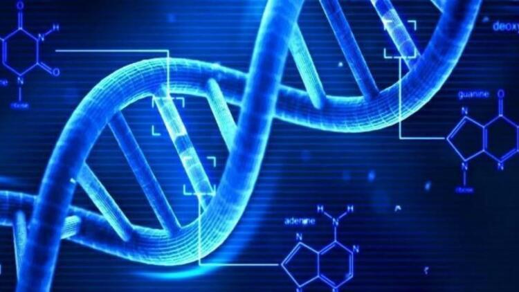 Bilim İnsanları, DNA'dan Yaşam Süresini Hesaplamaya Çalışıyor ile ilgili görsel sonucu