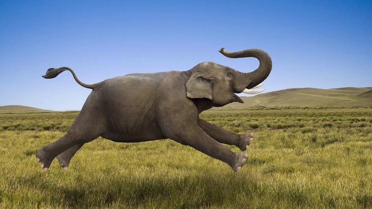 Filler Hangi ülkede Yaşar Fillerin Yaşam Alanı Neresidir Son