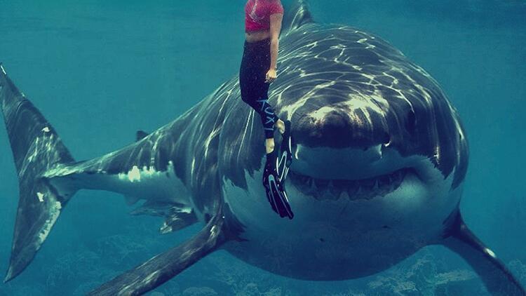 Köpekbalıkları ve insanlar aynı obezite genine sahip 35